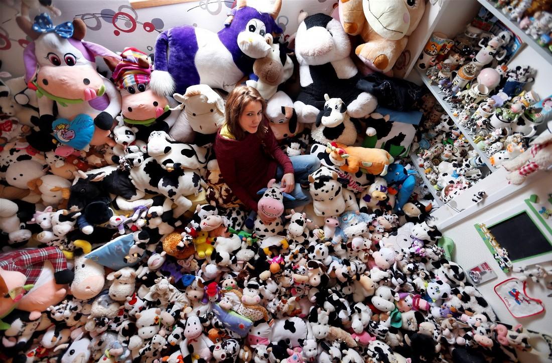 Французская модель Emeline Duhautoy представляет свою коллекцию из 1,679 игрушечных коров, которых она собирает в течение семи лет у себя дома в Сен-Омере, на севере Франции.