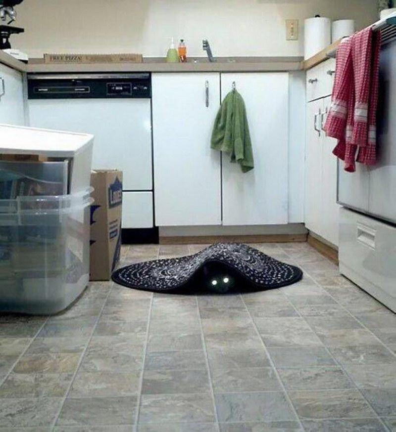 Ваш кот тоже демон? (40 фото)