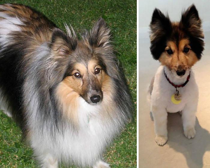 Каждой собаке нужна модная стрижка (40 фото)