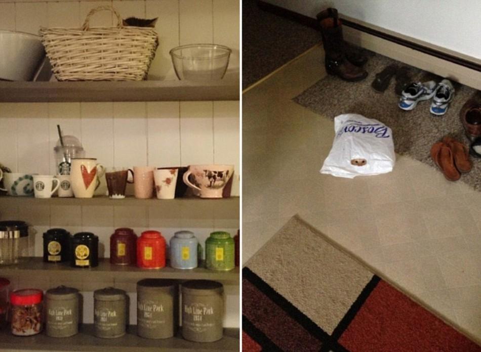 Найди котика (22 фото)