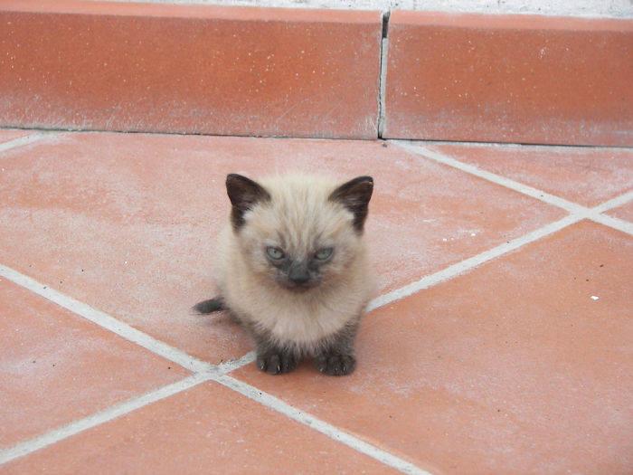 Злые и недовольные котята (30 фото)