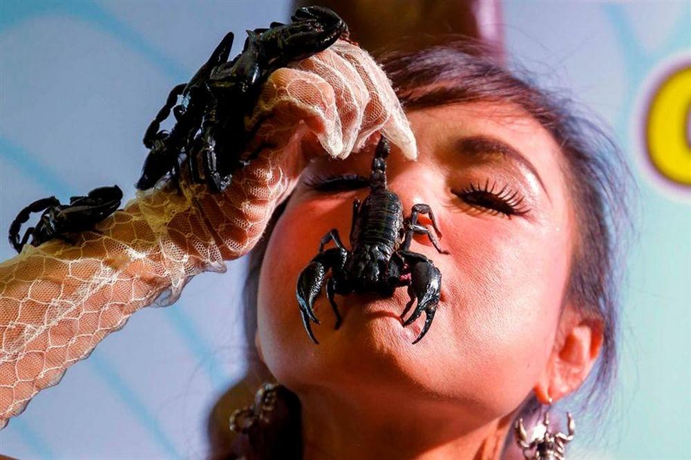 Королева скорпионов из Таиланда (11 фото)