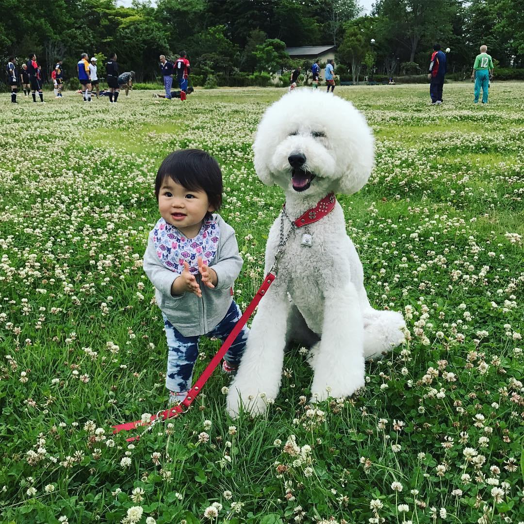 Эта годовалая девочка и ее гигантский пудель - воплощение дружбы! (20 фото)