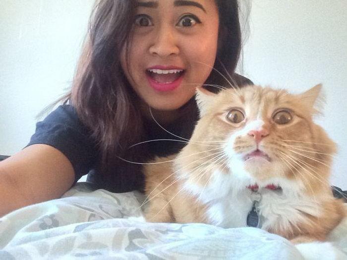 Коты которые не любят фотографироваться