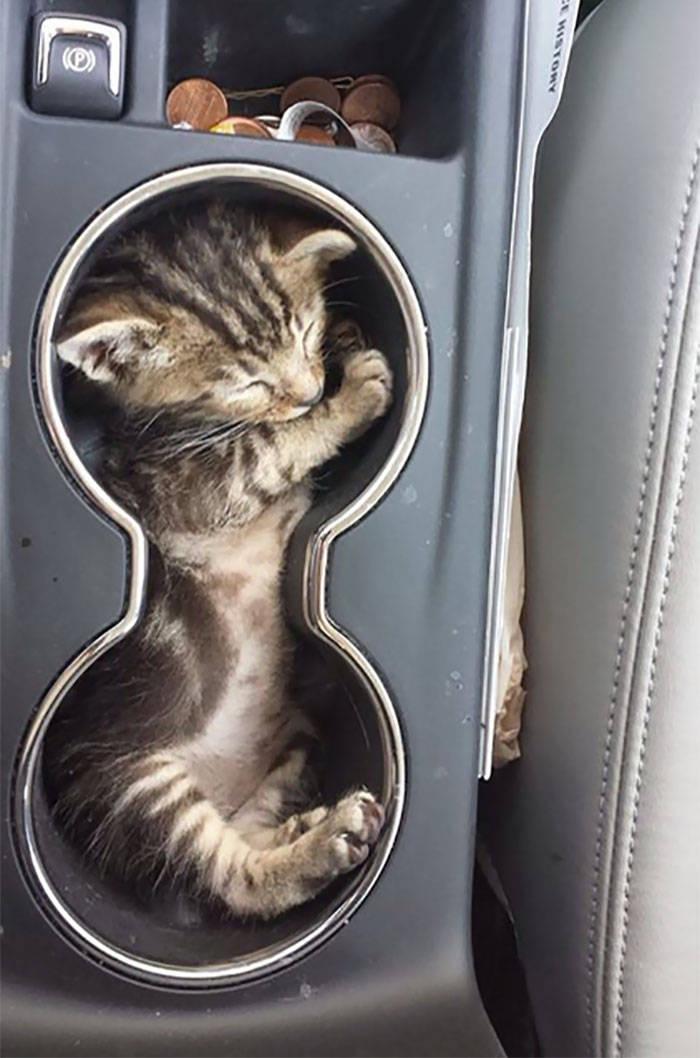 Если я туда весь влезу, то там и усну!