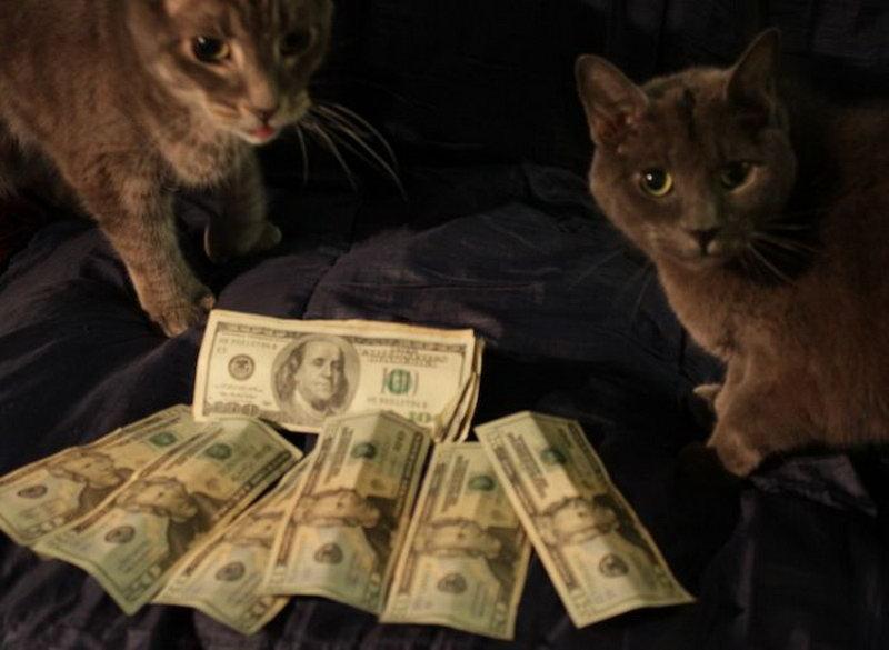 Богатые киски