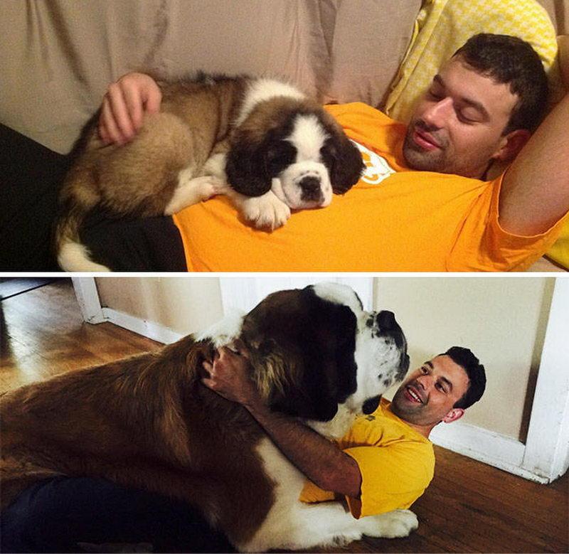 Большие собаки любящие посидеть на ручках