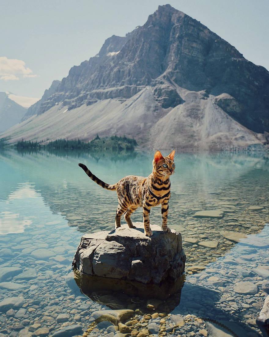 Эта кошка путешествовала больше чем вы! (38 фото)