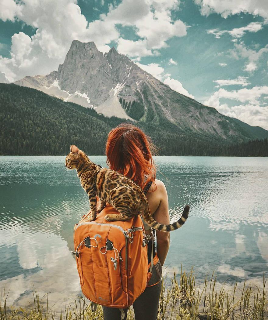 Эта кошка путешествовала больше чем вы!