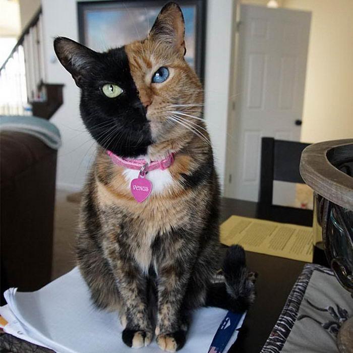 кошки с необычным рисункам на мехе