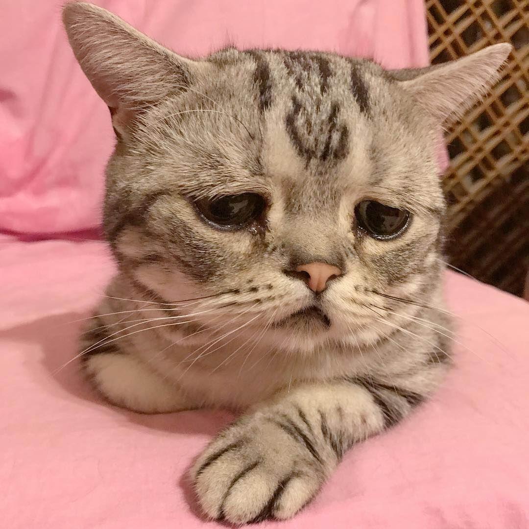 Встречайте Луху, саму грустную кошку в мире (30 фото)