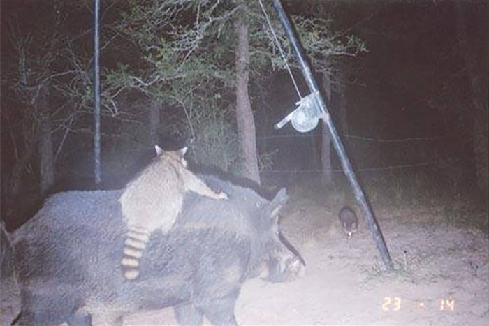 Скрытая жизнь животных