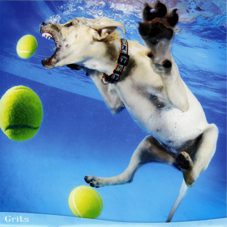 Забавный календарь с ныряющими собаками (10 фото)