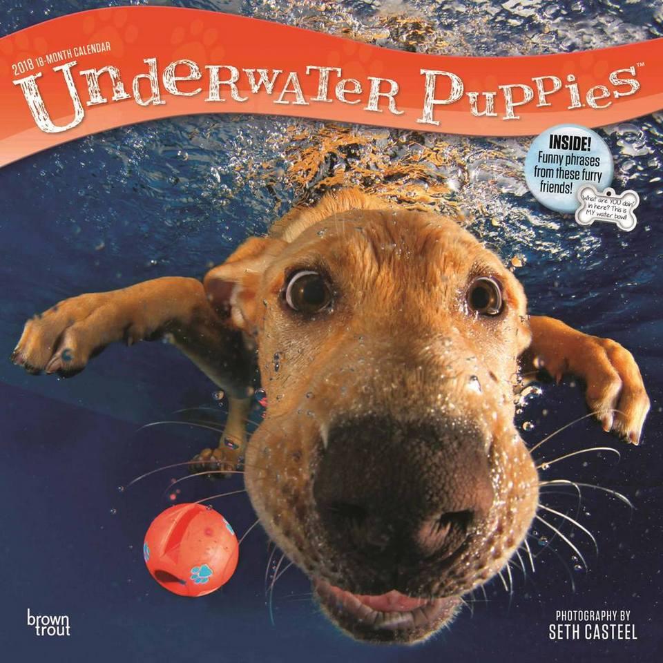Забавный календарь с ныряющими собаками