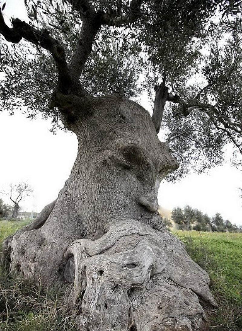 Когда деревья больше чем деревья