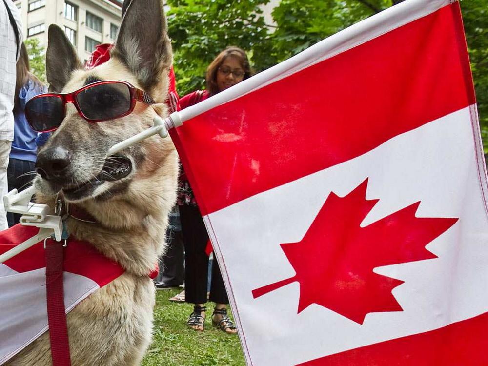 Тем временем в Канаде - 9 (40 фото)