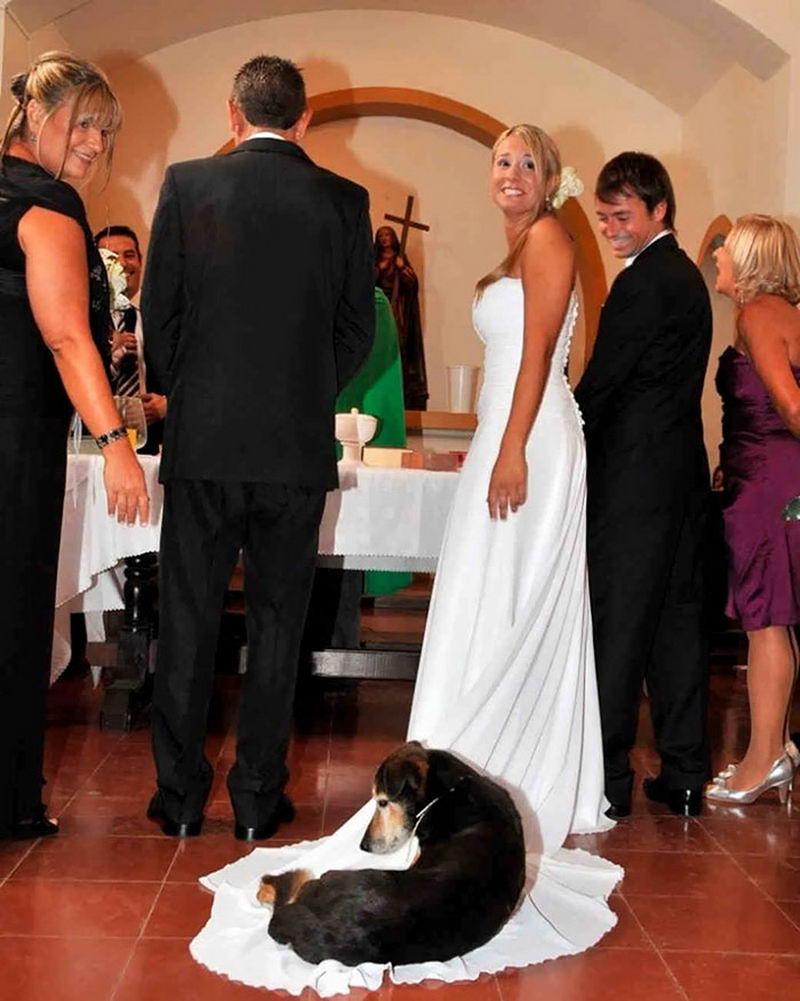 Эпические свадебные фотобомбы