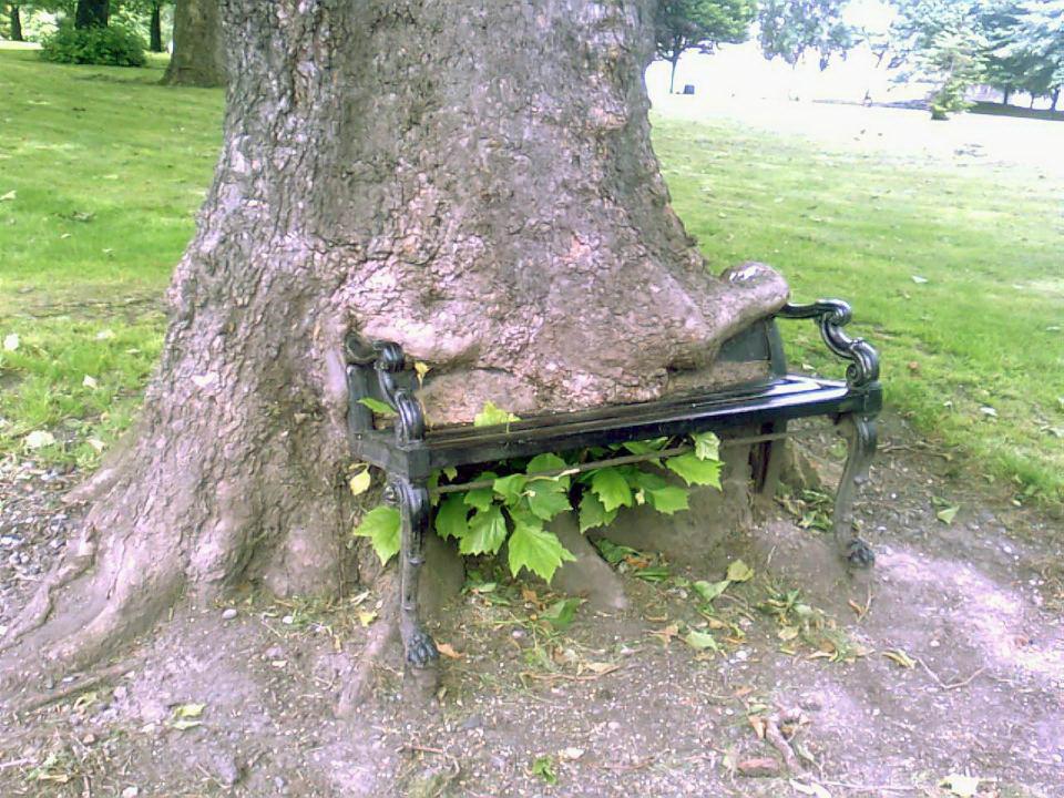 Деревья пожирающие окружающий мир