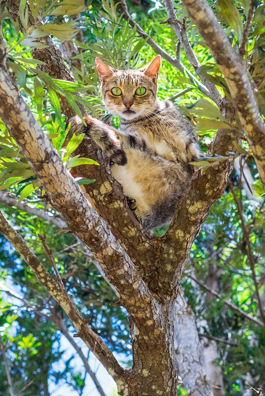 Кошачий рай на Гавайях