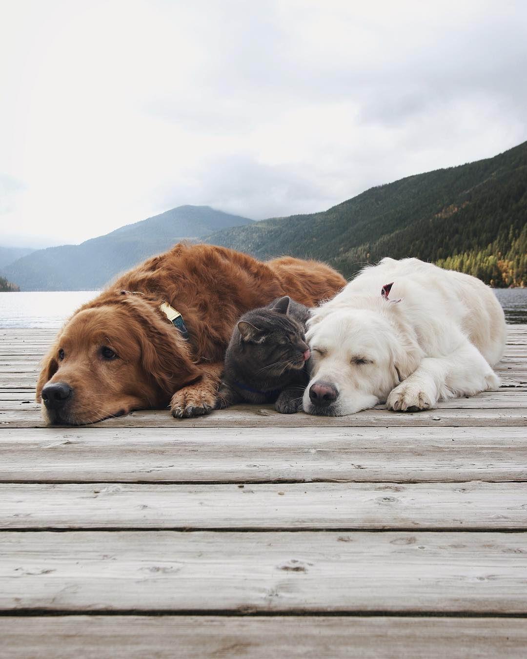 Три мохнатых лучших друга захватившие Instagram