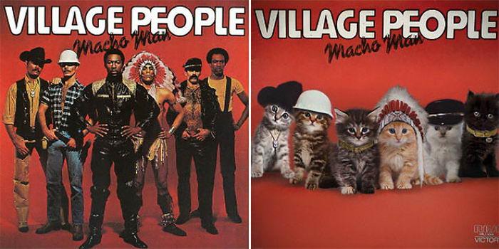 Кошки на обложке (35 фото)
