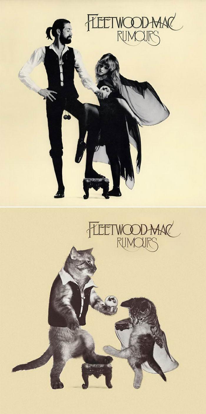Кошки на обложке