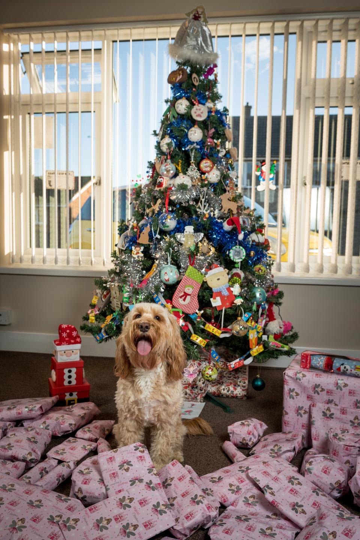 68 рождественских подарков за £1 000 для своей собаки (15 фото)