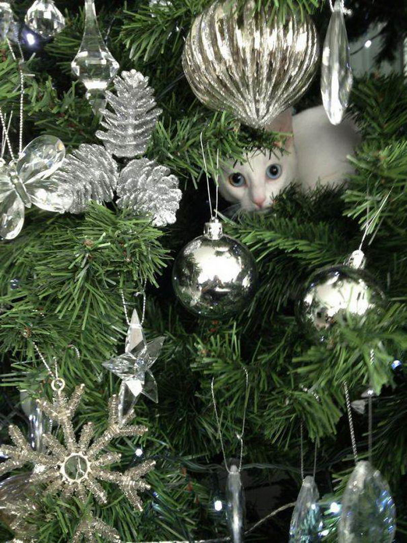 Кошки и собаки которые ненавидят новогодние праздники