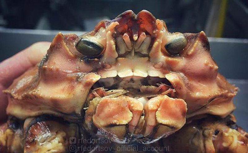 Что-то адовое и ужасное живет под водой
