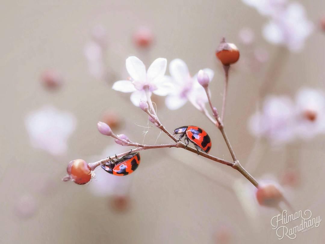 Красивые макрофотографии Хильман Рамдханы (25 фото)