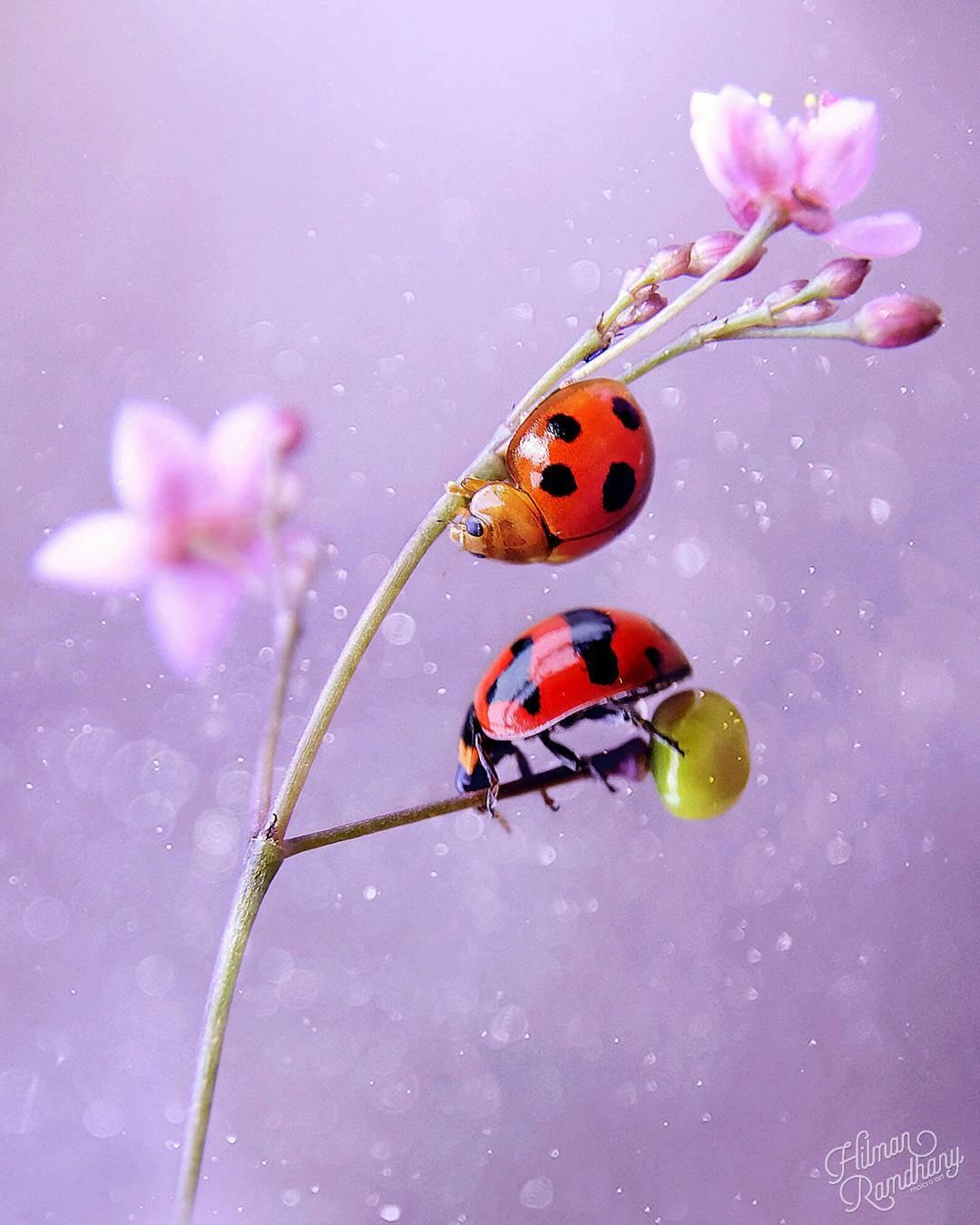 Красивые макрофотографии Хильман Рамдханы