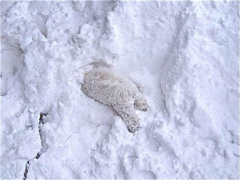 Животные впервые удивившие снег
