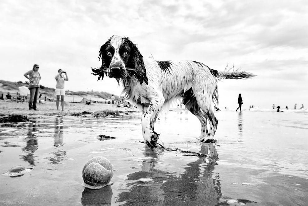 Уличный фотограф путешествуя по миру, снимает разных собак (35 фото)