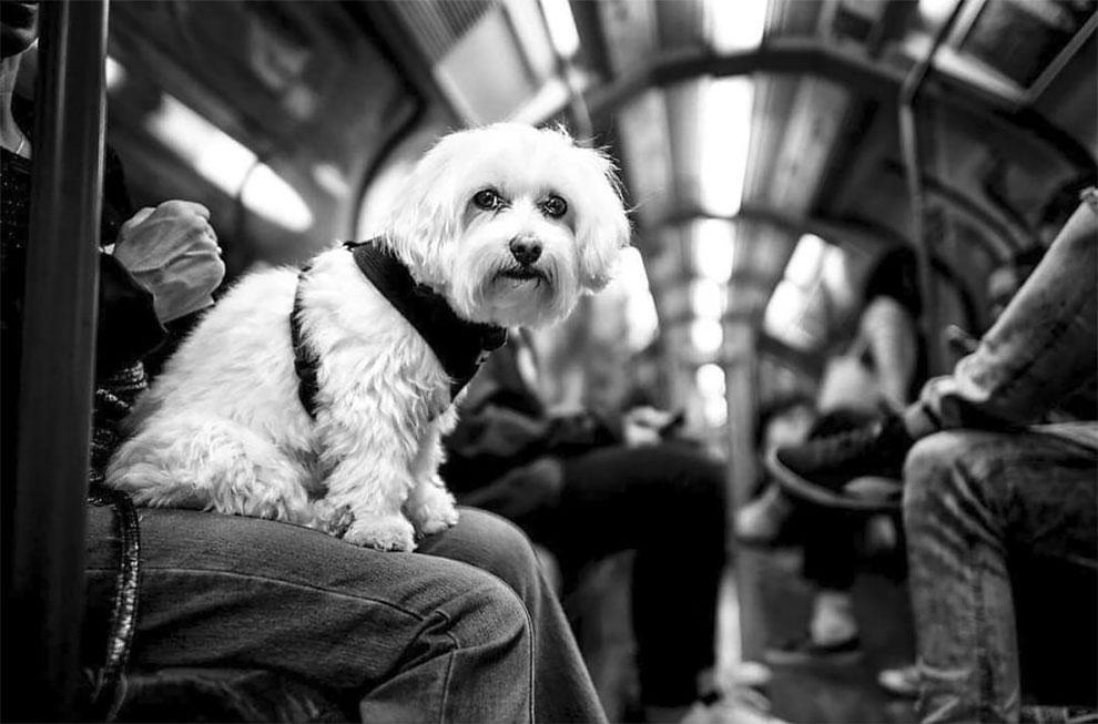 путешествуя по миру, снимает разных собак