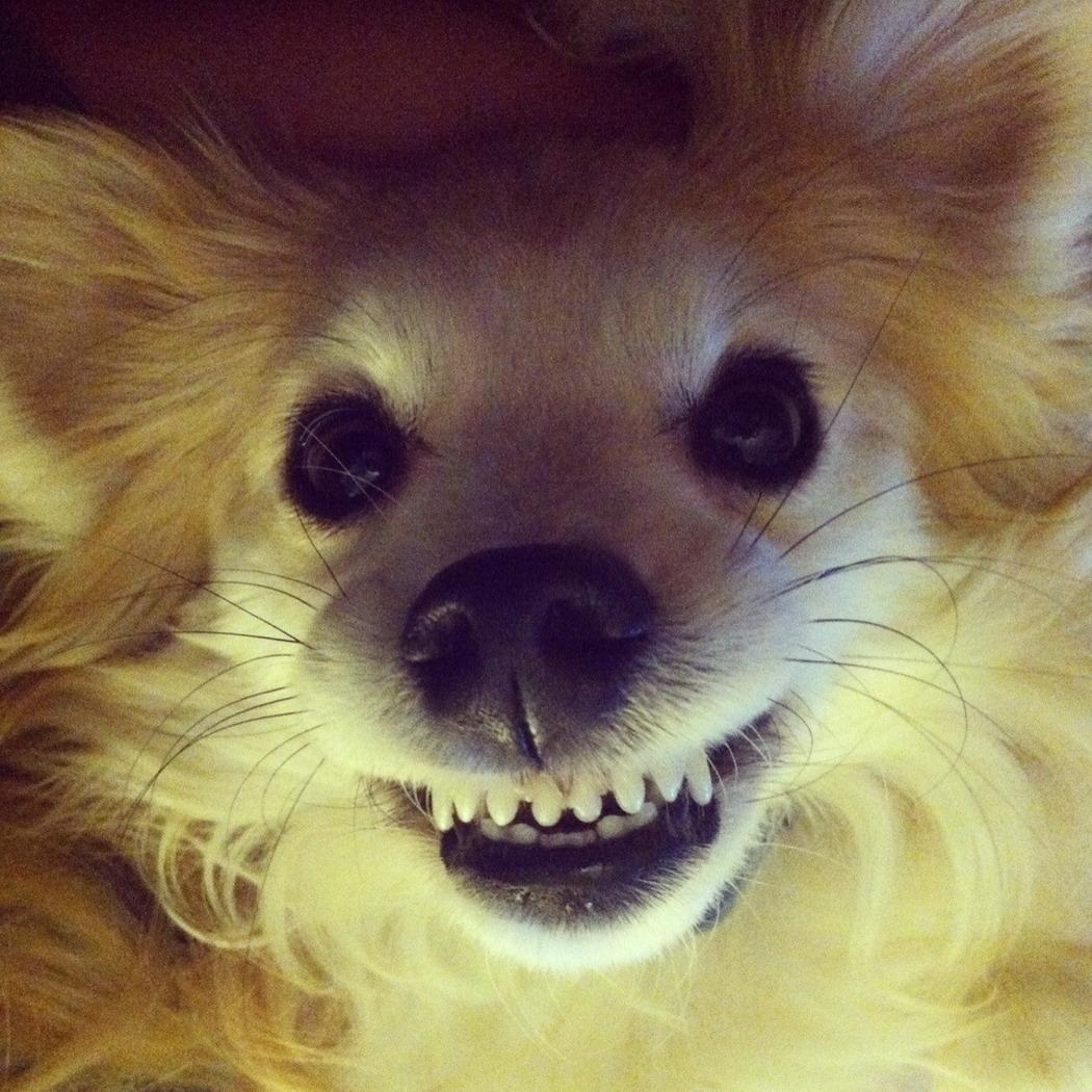 Забавные Животные - Funny Animals