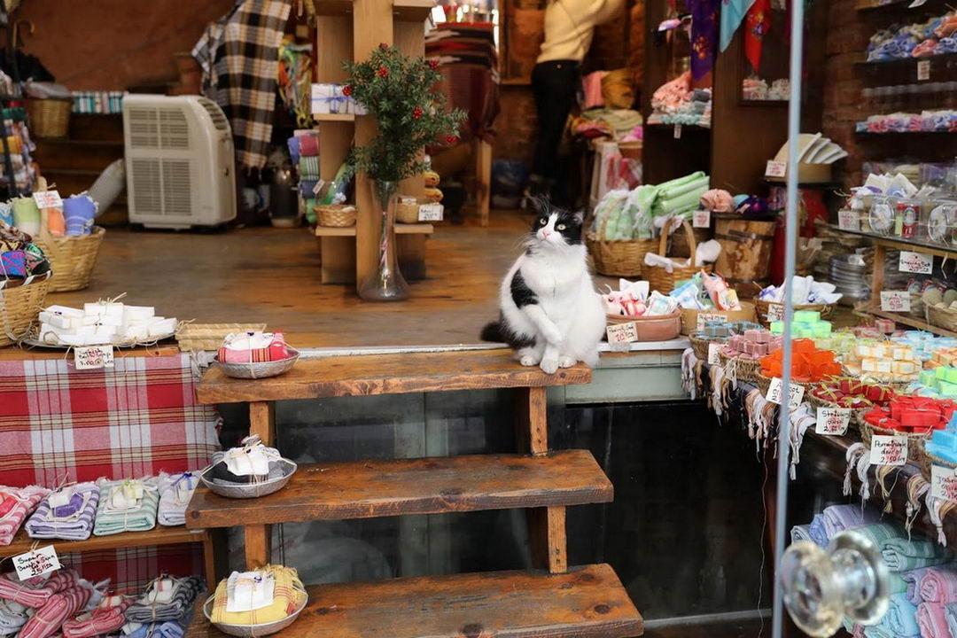 Стамбул: город котов
