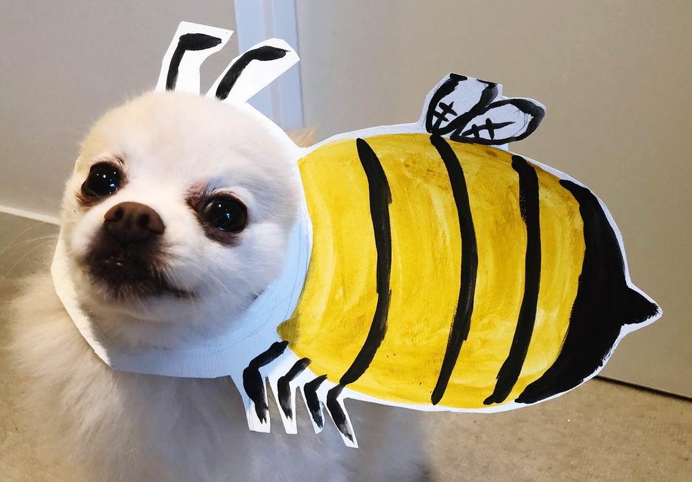 Забавные Животные - Funny Animals - 015 (32 фото)