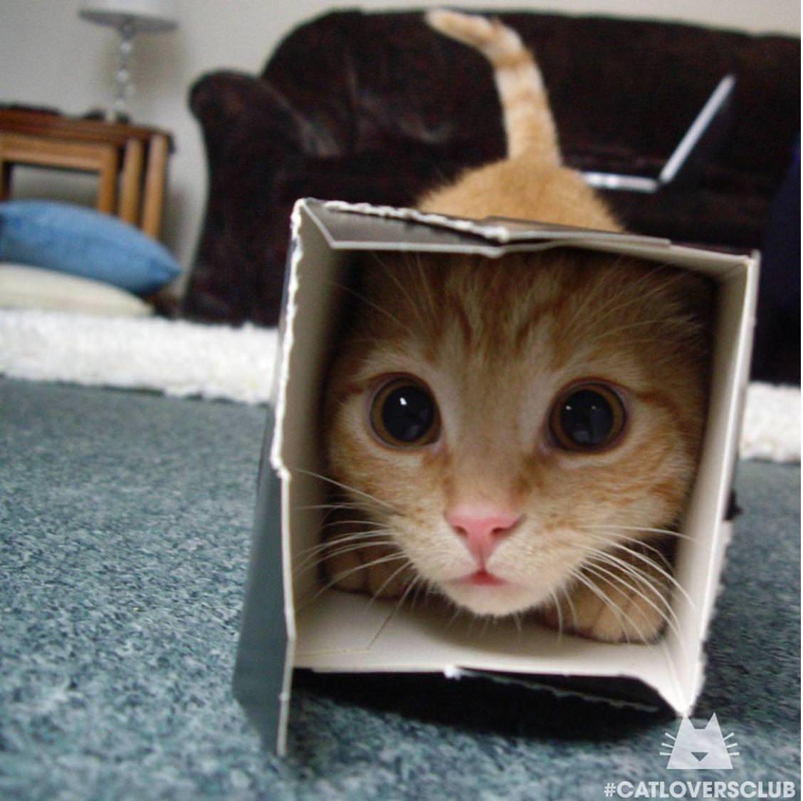 Забавные Животные - Кошки
