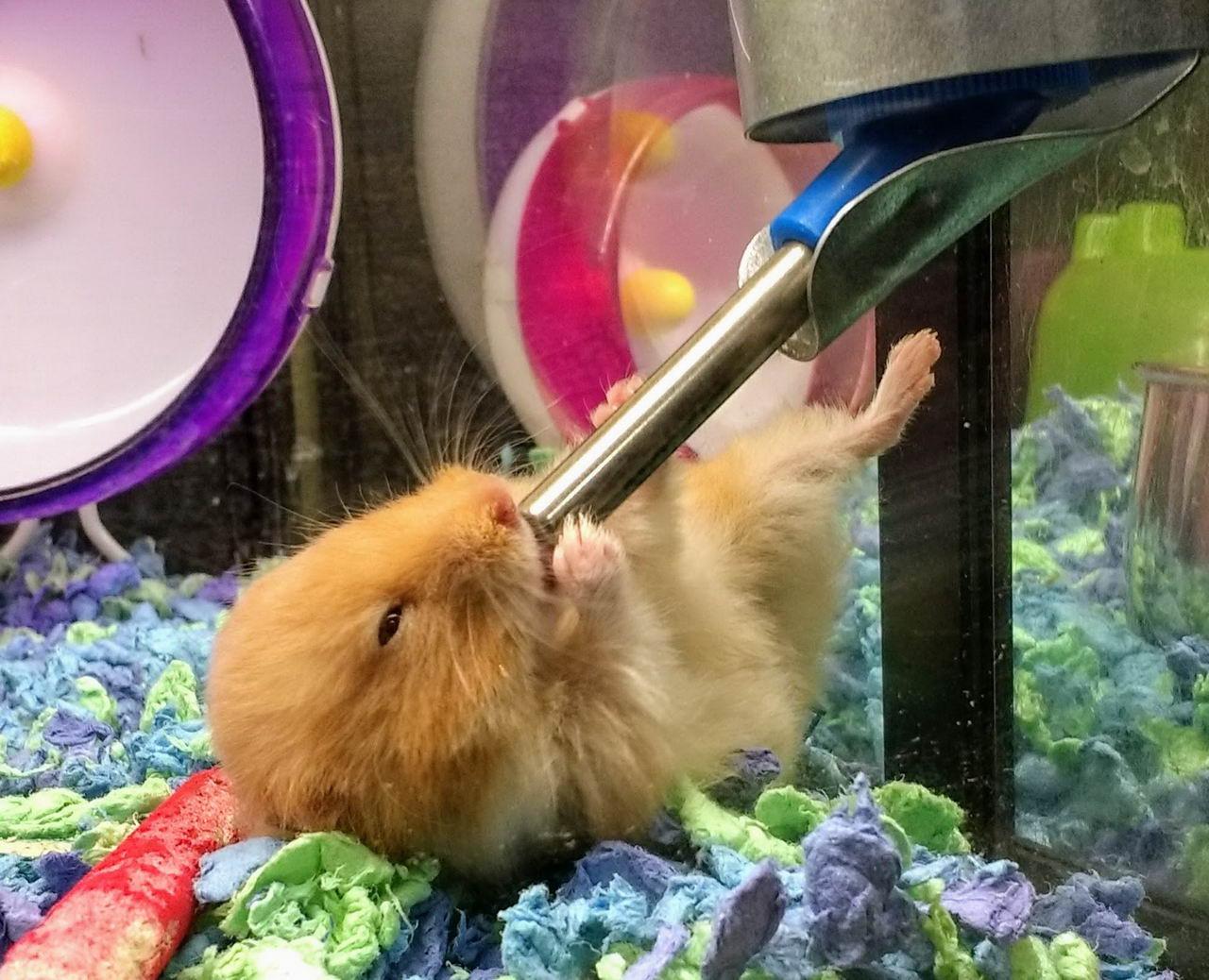 Забавные Животные - Funny Animals - 035 (36 фото)