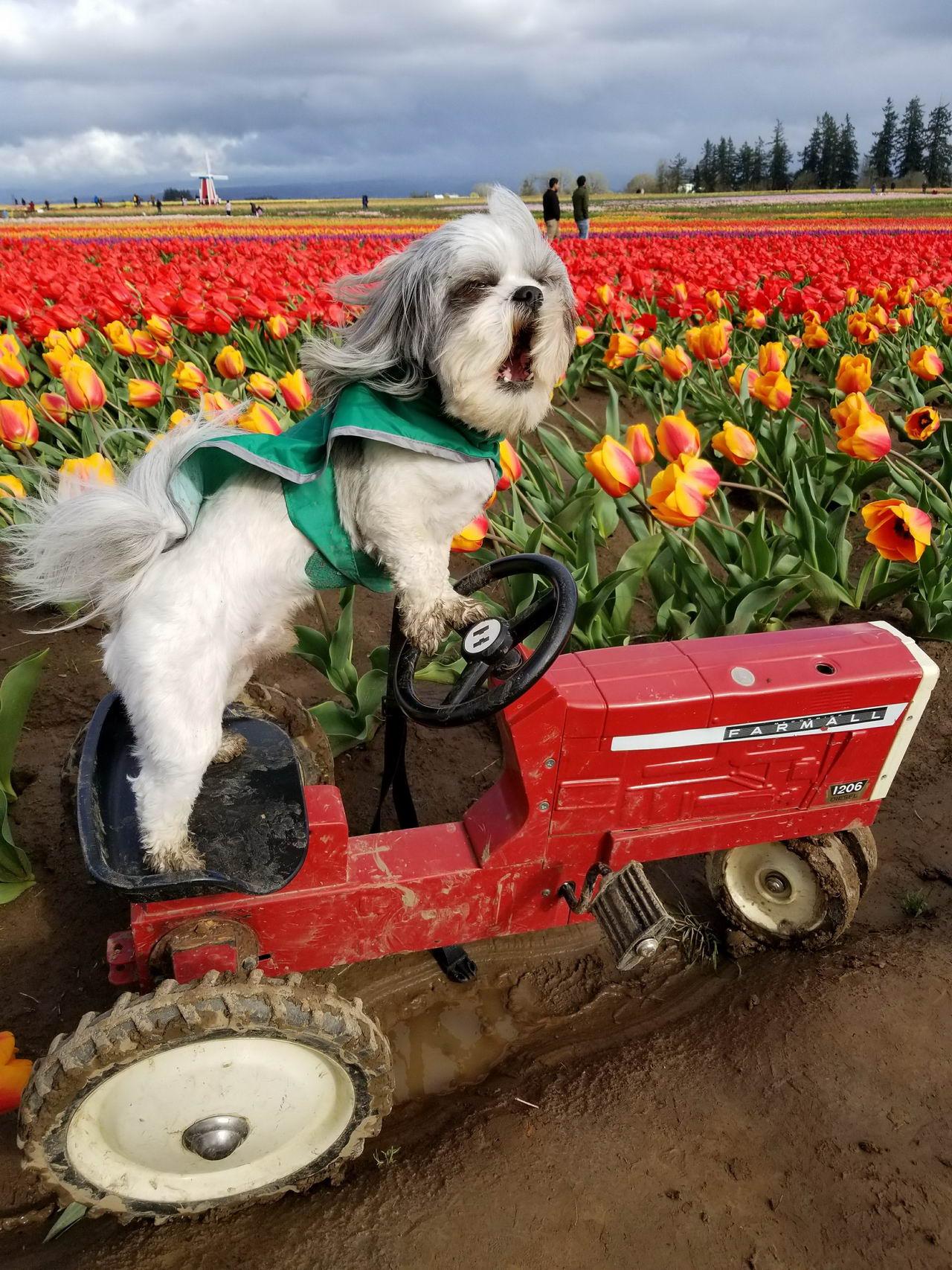 Забавные Животные - Pixmafia Funny Animals - 045 (40 фото)