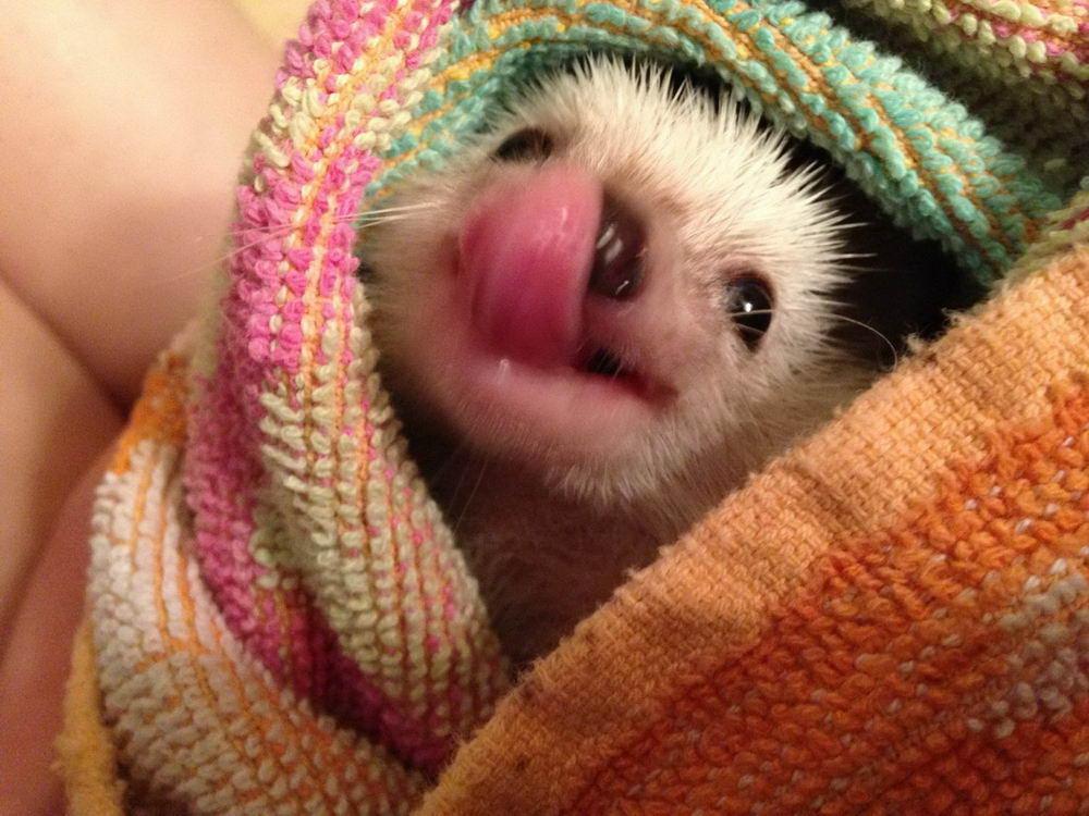 Забавные Животные - Funny Animals - 079 (35 фото)