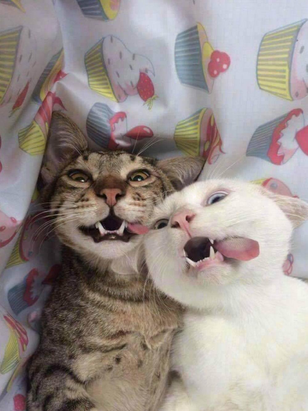 Забавные Животные - Funny Animals - 104 (38 фото)