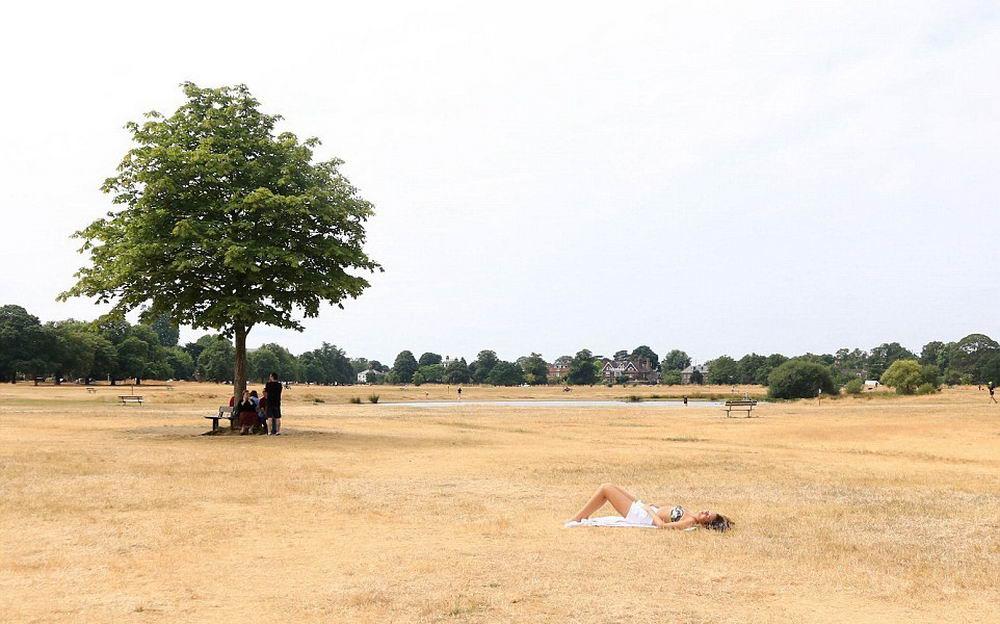 В Великобритании самое сухое и жаркое лето за последние 100 лет