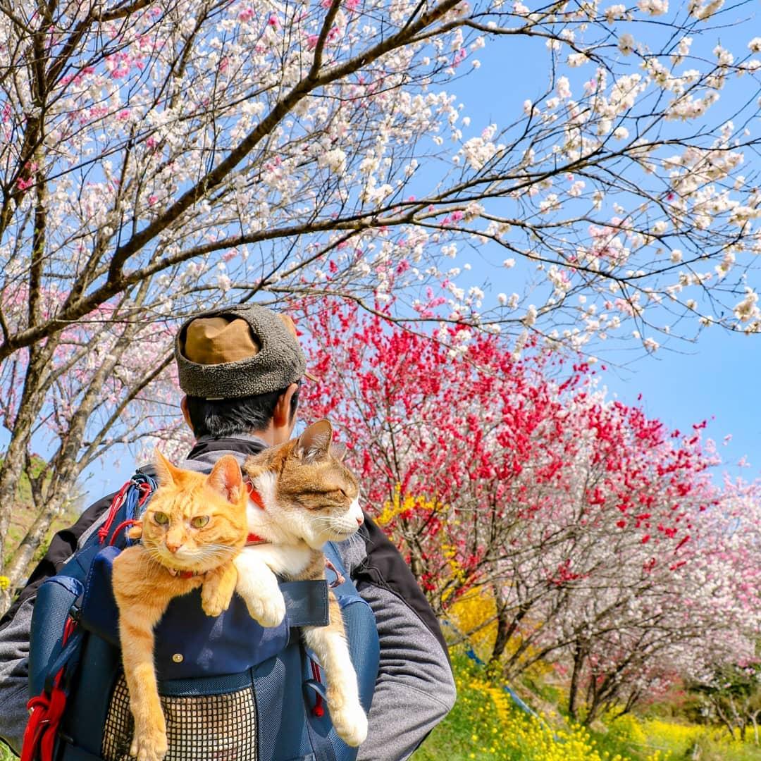 Кошки-путешественницы из Японии (50 фото)
