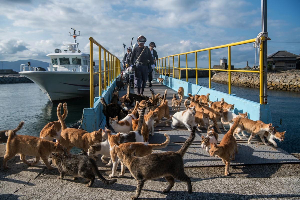 Кошки захватили остров Аосима в Японии (25 фото)