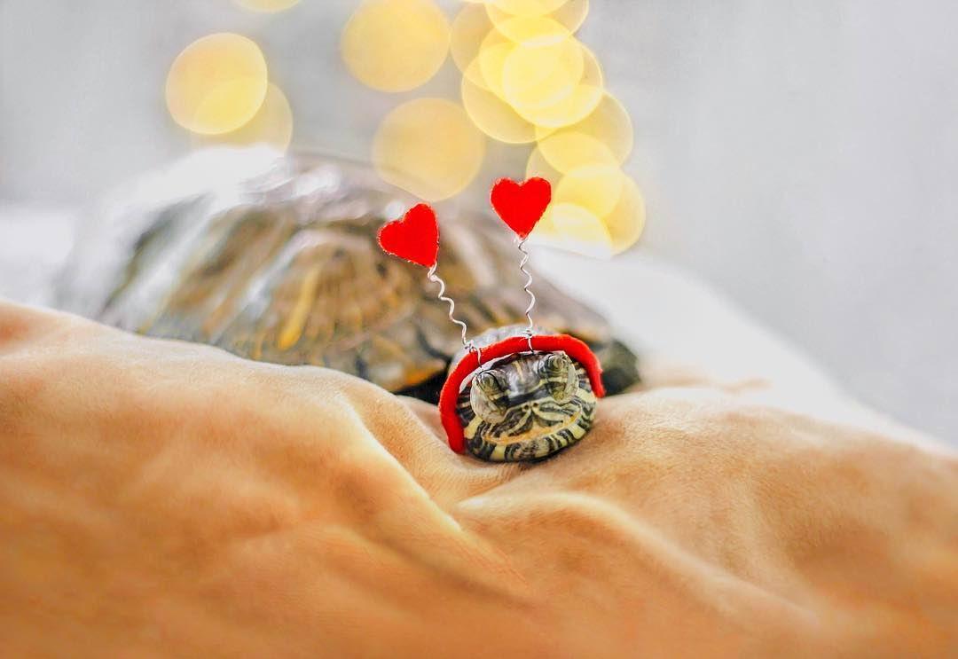 За приключениями пары черепах наблюдают тысячи поклонников в Instagram (25 фото)