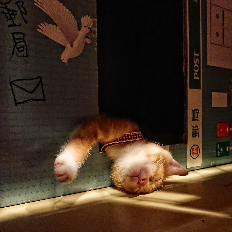 Забавные Животные - Funny Animals - 164 (33 фото)