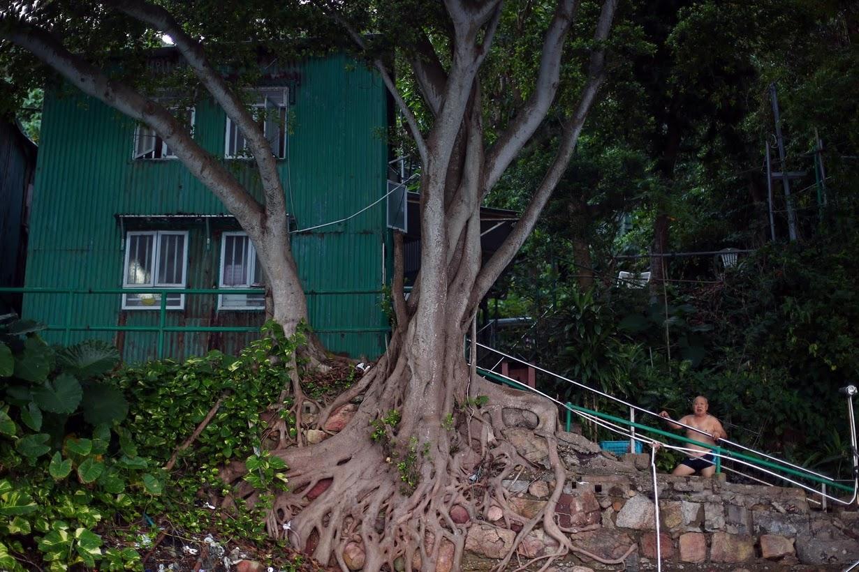 Моржи острова Гонконг (20 фото)