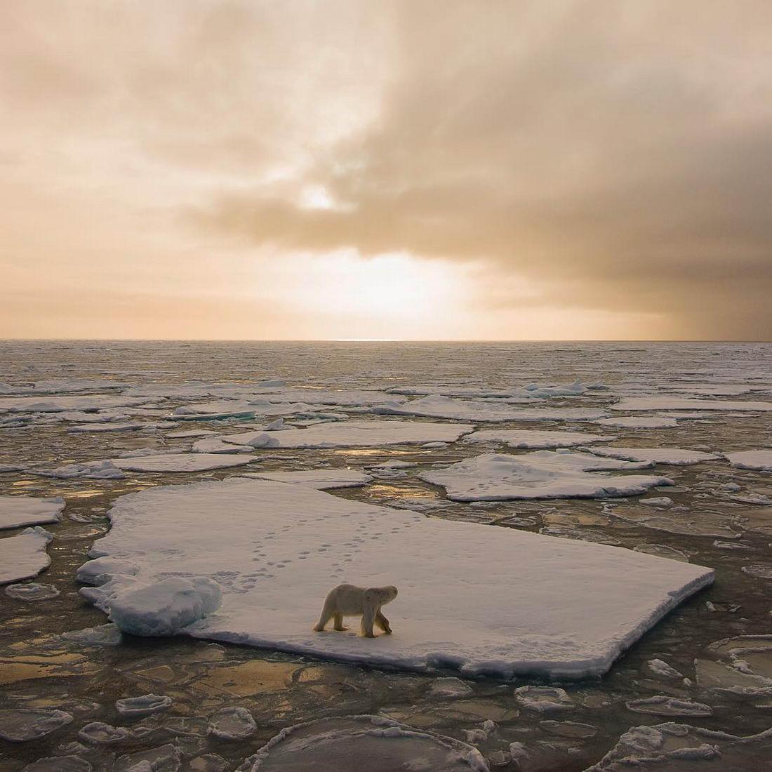 Арктическая дикая природа на снимках Одуна Ли Даля (25 фото)