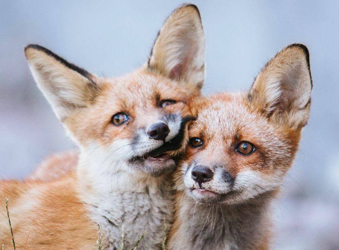 Забавные Животные - Funny Animals - 205 (30 фото)